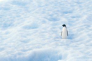 update algorytmu google - penguin